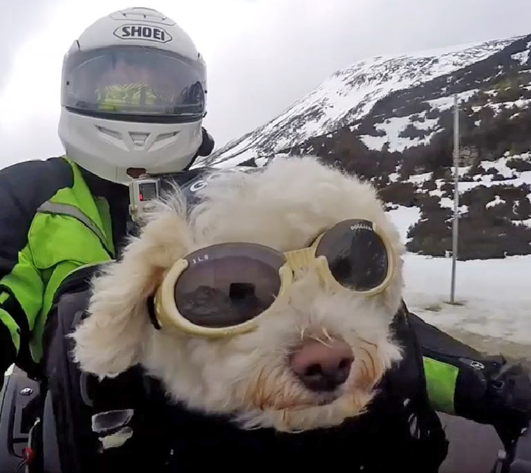 adventure-motorcycle-dogs-riding-world-motorbike-milly.jpg