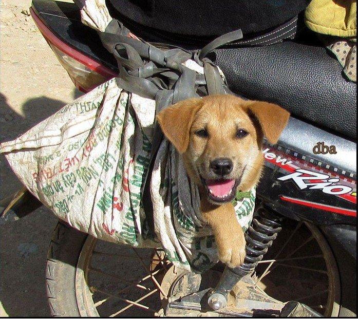 dog on motorbike.jpg
