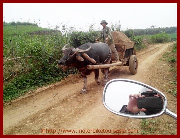Buffalo driver.jpg