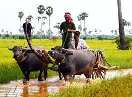 Cambodia trip.jpg